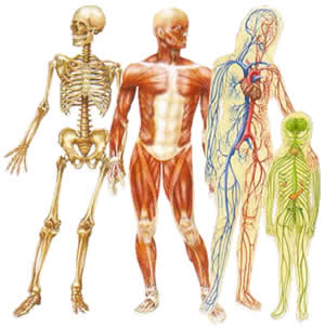 Image result for human system